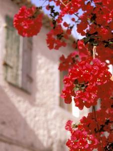 Red Flowers on Main Street, Kardamyli, Messina, Peloponnese, Greece by Walter Bibikow