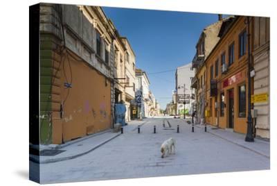 Romania, Constanta, Piata Ovidiu, Ovid Square, Street with Lone Dog