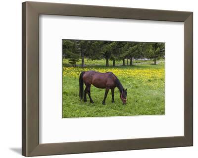 Romania, Transylvania, Tihuta Pass, Horse in Pasture
