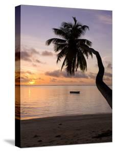 Seychelles, Mahe Island, Horizontal Palm, Fairyland Beach, Dawn by Walter Bibikow