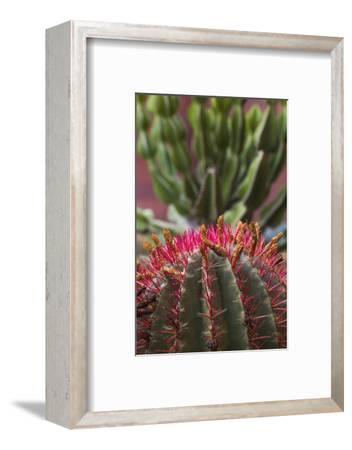 Spain, Canary Islands, La Gomera, San Sebastian De La Gomera, Cactus Detail