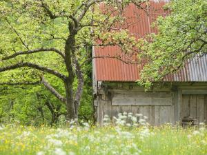 Spring Blossoms and Alpine House, Spodnja Trenta, Gorenjska, Slovenia by Walter Bibikow