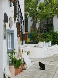 Street View with Black Cat, Manolates, Samos, Aegean Islands, Greece by Walter Bibikow
