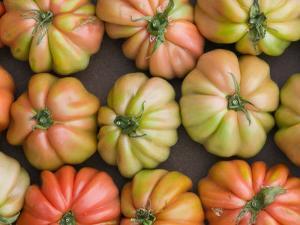 Tomatoes, Positano, Amalfi Coast, Campania, Italy by Walter Bibikow