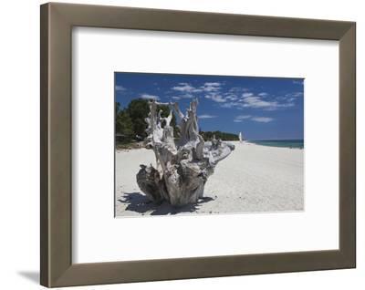 Town Beach Driftwood, Ghisonaccia, Costa Derena, Corsica, France
