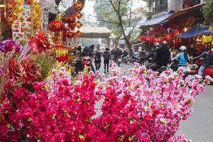 Vietnam, Hanoi. Tet Lunar New Year, Cherry Blossoms for Sale by Walter Bibikow
