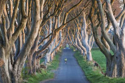 UK, Northern Ireland, County Antrim, Ballymoney, The Dark Hedges, tree lined road, dawn