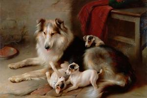 A Collie with Fox Terrier Puppies, 1913 by Walter Hunt