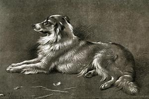 A Sheep Dog, 1901 by Walter Hunt
