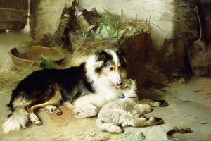 Motherless-The Shepherd's Pet, 1897 by Walter Hunt