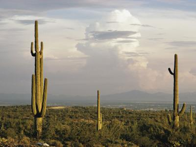 Desert Landscape and Towering Clouds
