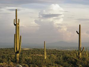 Desert Scene with Saguaro Cacti Near Tucson by Walter Meayers Edwards