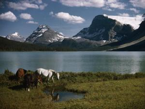 Horses Graze in a Lakeside Meadow in the Canadian Rockies by Walter Meayers Edwards
