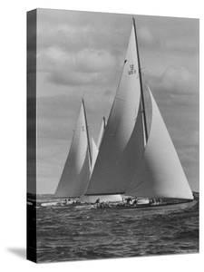 New York Yacht Club Races by Walter Sanders