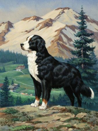 Bernese Mountain Dog Stands on a Hill Overlooking a Rural Valley