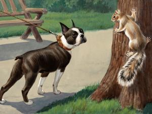 Boston Terrier Eyes a Nervous Squirrel by Walter Weber