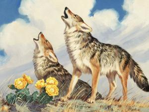 Coyotes Howl to the Setting Sun by Walter Weber