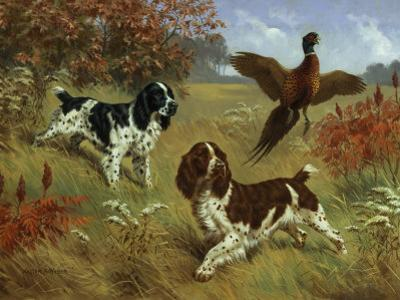 Energetic English Springer Spaniels Flush a Bird from its Cover by Walter Weber