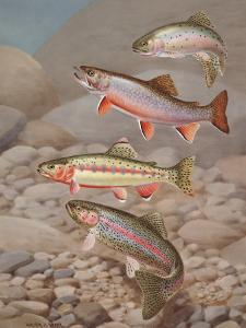 Four Species of Trout, Rarely Seen Together, Depicted in Wind River by Walter Weber