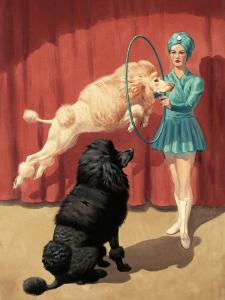 French Poodle Jumps Through a Hoop During a Circus Performance by Walter Weber