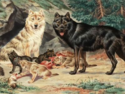 Gray and Black Wolves Interbreed and Raise their Pups in Alaskan Cave by Walter Weber