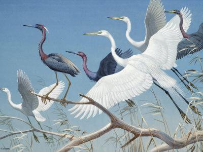 Herons and Egrets Perch on Branches and Fly into Blue Sky