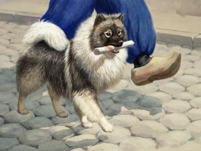 Keeshond Carries a Rolled Newspaper by Walter Weber