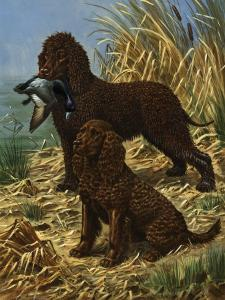 Portrait of American and Irish Water Spaniels by Walter Weber