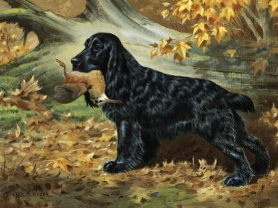 Portrait of English Cocker Spaniel Holding a Bird in its Jaws by Walter Weber