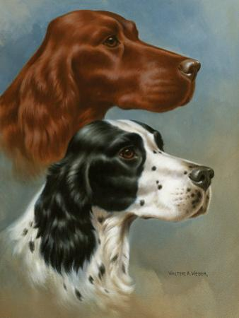 Portraits of Irish and English Setters by Walter Weber