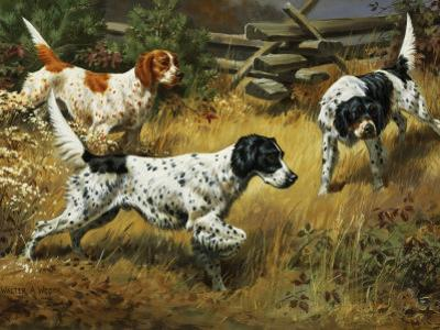 Quail Hides in a Covert from Pointing English Setters by Walter Weber