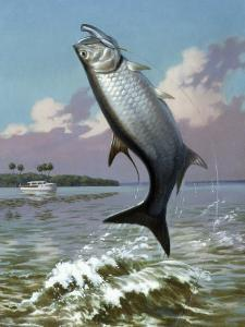 Tarpon Caught on Hook Leaps Out of Water, Fishing Boat Floats Nearby by Walter Weber