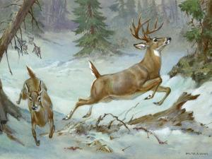 White Tail Buck and Doe Flee from Pursuing Wolves by Walter Weber