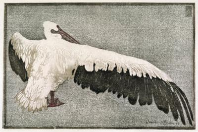 Pelican with Outspread Wings