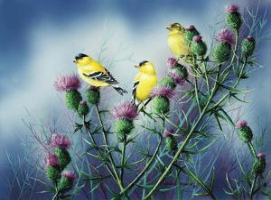 American Goldfinch and Thistle by Wanda Mumm