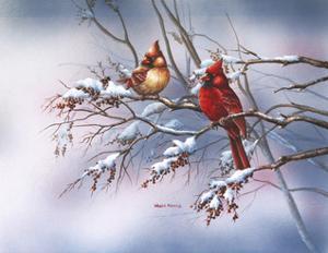 Cardinal in Sumac by Wanda Mumm