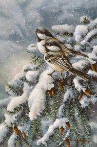 Chickadee in Spruce by Wanda Mumm