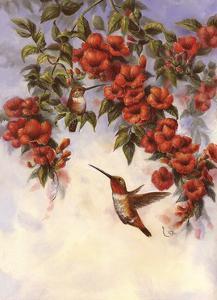 Hummingbird E by Wanda Mumm