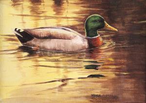 Mallard by Wanda Mumm