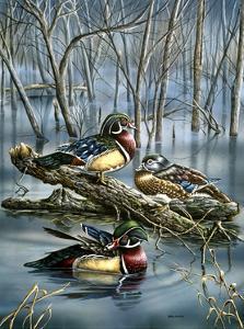 Misty Woodducks by Wanda Mumm