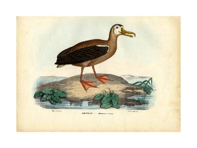 Wandering Albatross, 1863-79-Raimundo Petraroja-Giclee Print