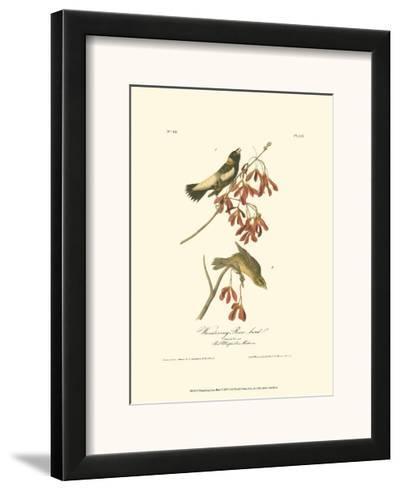 Wandering Rice Bird-John James Audubon-Framed Art Print