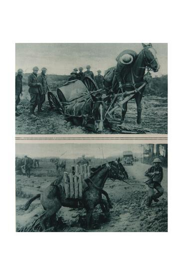 War Horses Sinking in the Mud, Northern France, August 1917--Giclee Print