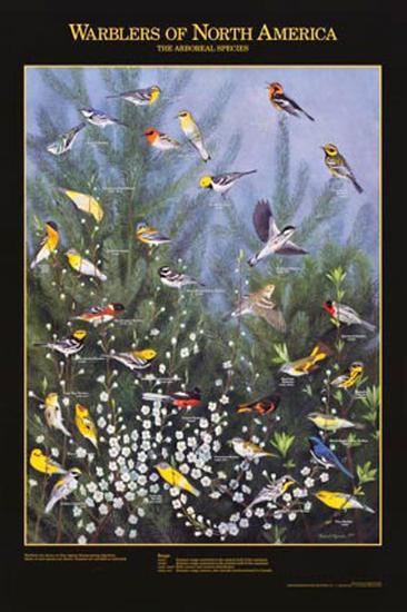 Warblers of North America--Art Print