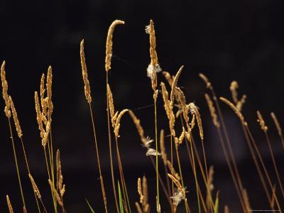 Warm Sunlight Highlights Tall Grasses-Raymond Gehman-Photographic Print
