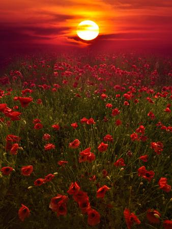 https://imgc.artprintimages.com/img/print/warm-sunset_u-l-phf4tq0.jpg?p=0