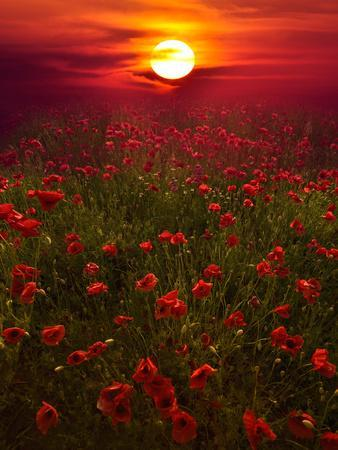 https://imgc.artprintimages.com/img/print/warm-sunset_u-l-q1gd7sd0.jpg?p=0