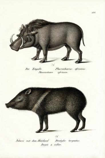 Warthog, 1824-Karl Joseph Brodtmann-Giclee Print