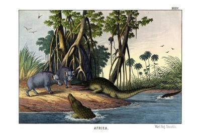 Warthog, 1860