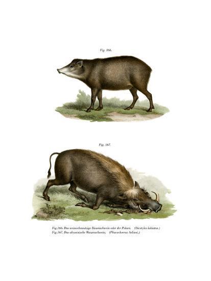 Warthog, 1860--Giclee Print
